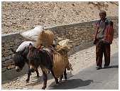 slides/95017424.jpg Himalaya Indien Kloster Ladakh Motorrad Mönch Tanglangla Tempel Tso Moriri Tso kar 95017424