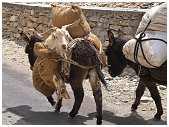 slides/95017427.jpg Himalaya Indien Kloster Ladakh Motorrad Mönch Tanglangla Tempel Tso Moriri Tso kar 95017427
