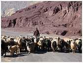 slides/95317057.jpg Himalaya Indien Kloster Ladakh Motorrad Mönch Tanglangla Tempel Tso Moriri Tso kar 95317057