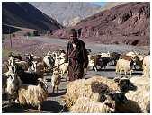 slides/95317063.jpg Himalaya Indien Kloster Ladakh Motorrad Mönch Tanglangla Tempel Tso Moriri Tso kar 95317063