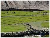 slides/95317091.jpg Himalaya Indien Kloster Ladakh Motorrad Mönch Tanglangla Tempel Tso Moriri Tso kar 95317091
